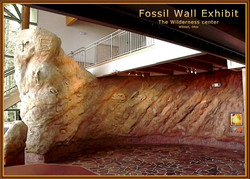 FOSSIL WALL EXHIBIT