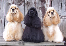 hairy dogs