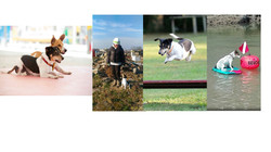 Obedience, k-9 search & rescue, agility, water training, fun & much more...