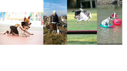Obedience, k-9 search & rescue,agility, water, fun & much more