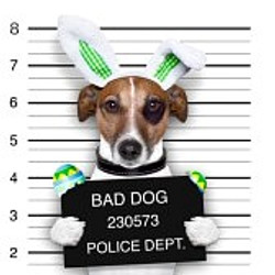 """""""Bad dogs"""""""