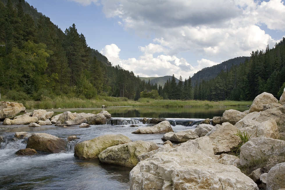 Trout stream in the Black Hills of South