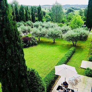 olive trees in b&b villa de lablac