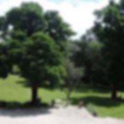 arbres et jardin