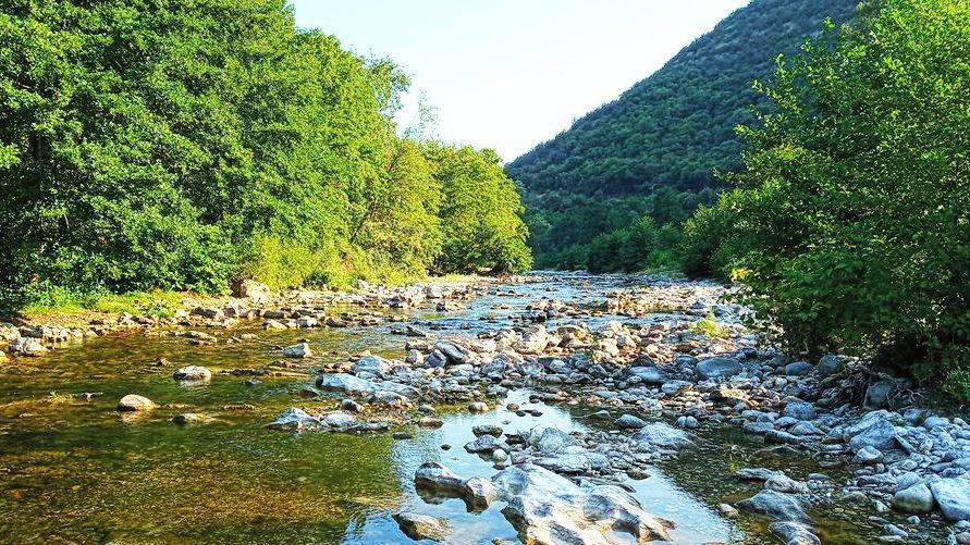 riviere entouee de foret