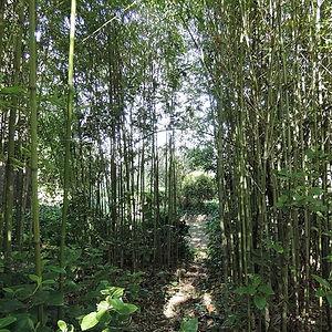 jardin de bambou de la chambre d'hote