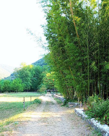 chemin droit avec des bambous
