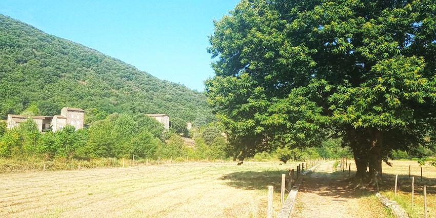 chemin dans un champs avec arbre magnifique