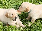dogs-1210323_1920.jpg
