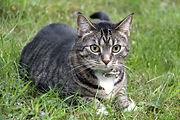 cat-2561840.jpg
