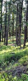 9999 Boulder Creek Rd