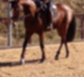 Maxwell equestrian, Leather horse tendon fetlock boots