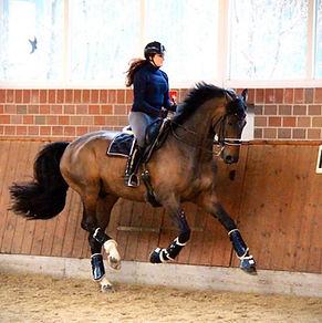 Amelia White - maxwell equestrian 1.jpg