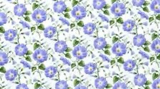Hydrangea Birdsong