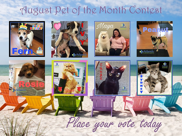 Pet of the Month August Poster.jpg