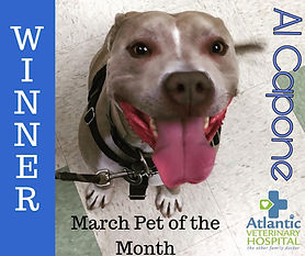 March Pet of the Month WINNER!.jpg