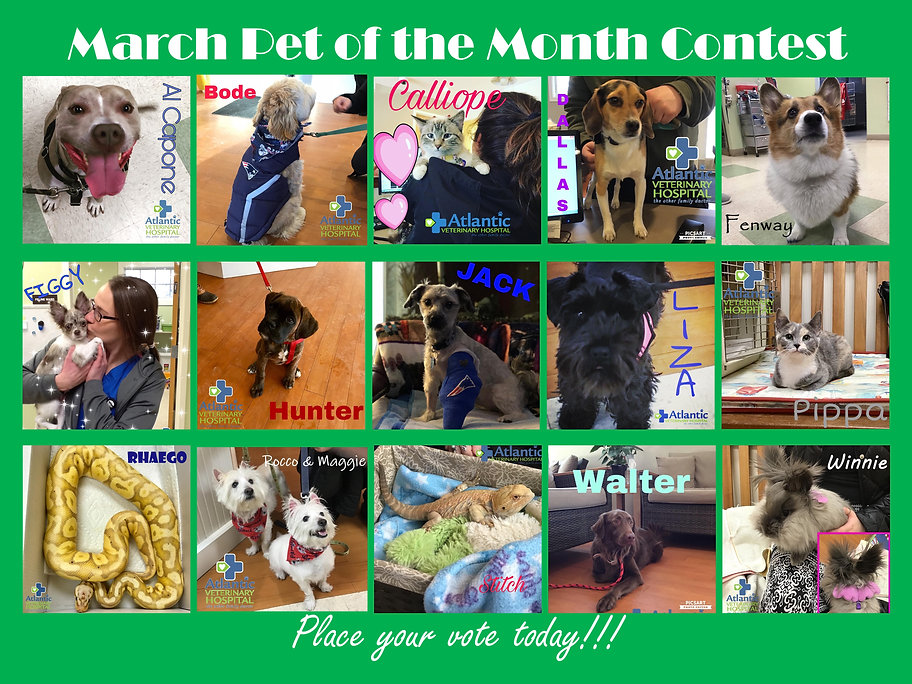 Pet of the Month March Poster.jpg