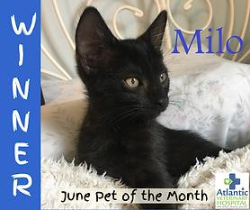 Milo June POTM winner.png