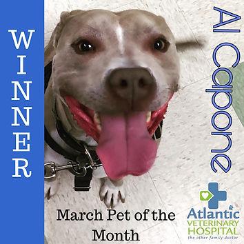 March Pet of the Month WINNER! insta.jpg