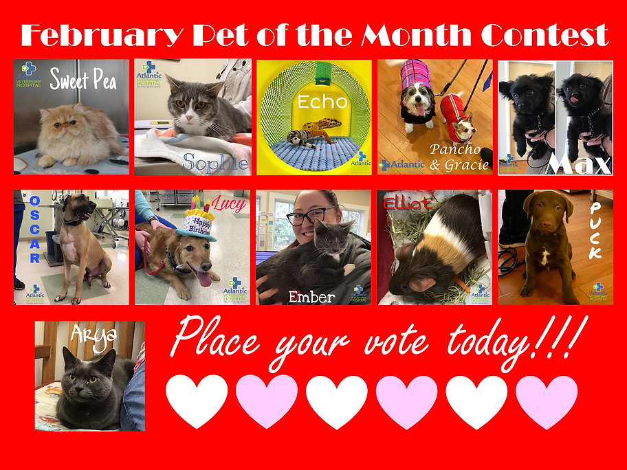 Pet of the Month February Poster.jpg