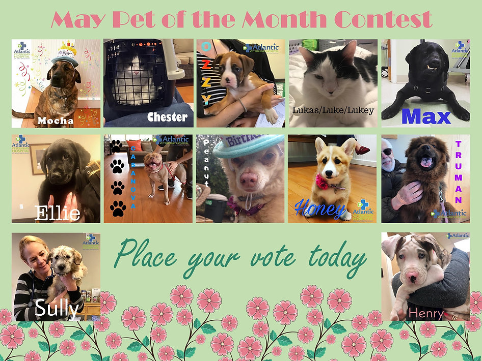 Pet of the Month May Poster.jpg