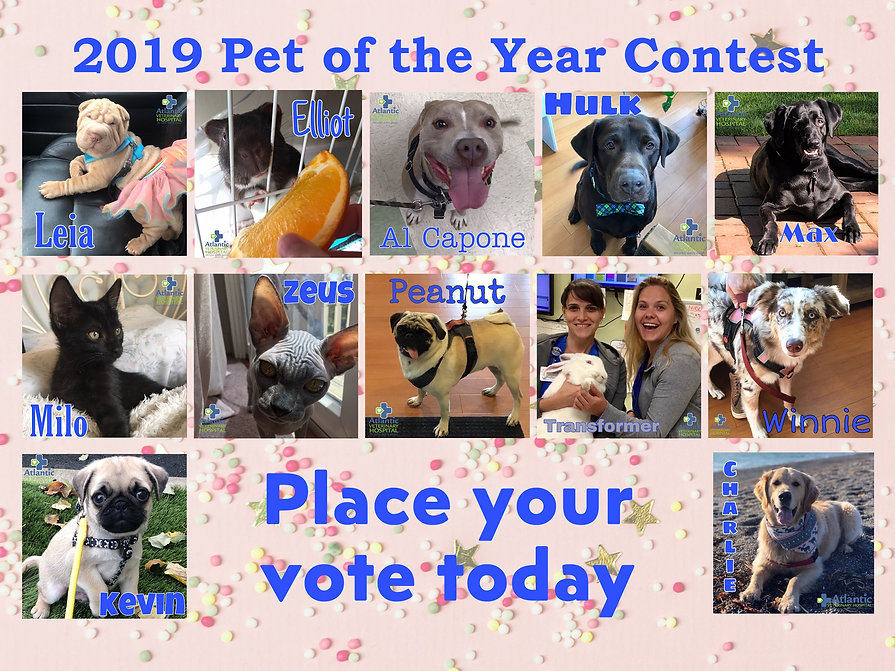 Pet of the year Poster.jpg