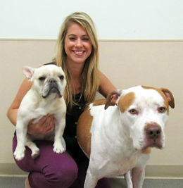 blonde female with pit bull and frenchie