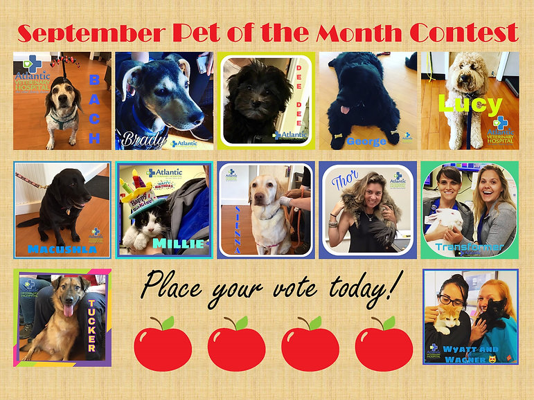 Pet of the Month September Poster.jpg