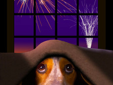 OH NO!! Here come the Fireworks!!!