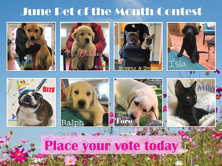 Pet of the Month June Poster.jpg