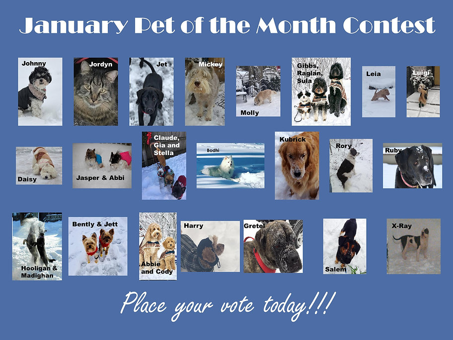 Pet of the Month January Poster.jpg