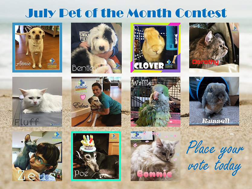 Pet of the Month July Poster.jpg