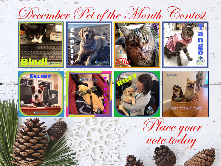 Pet of the Month December Poster.jpg