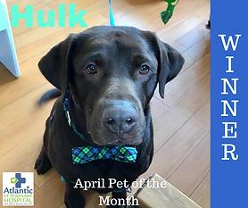 April Pet of the Month WINNER facebook.p