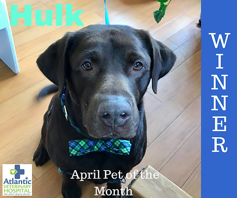 April Pet of the Month WINNER facebook.p