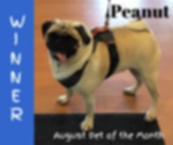 peanut potm facebook.png