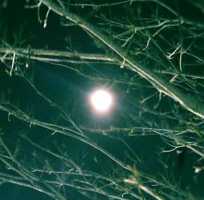 明日は満月 ● !