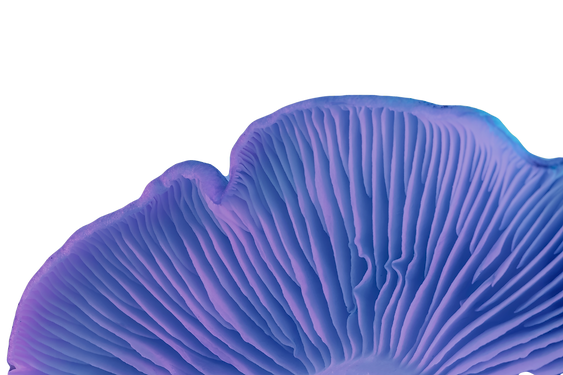 Close%20up%20bunch%20mushrooms%20color%2