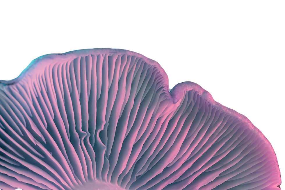 Close up bunch mushrooms color light. Be