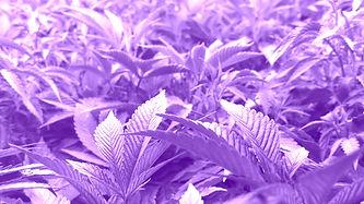 ammo flower_edited.jpg