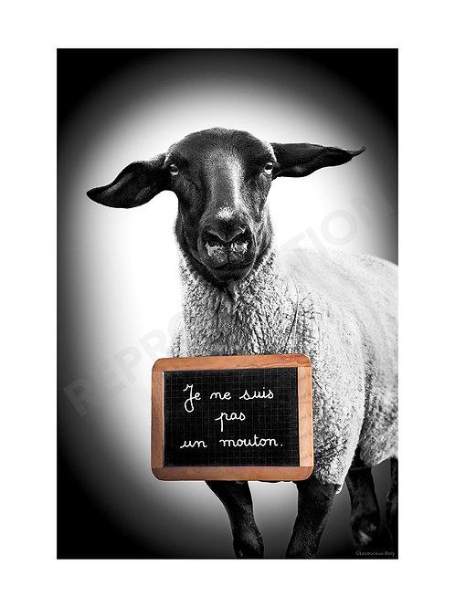 Je Ne Suis Pas Un Mouton (Gd Format) 40x55 cm