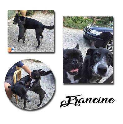 Francine copie.jpg