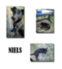NIELS copie.jpg