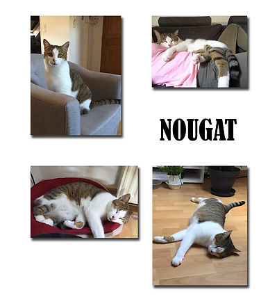 NOUGAT copie.jpg