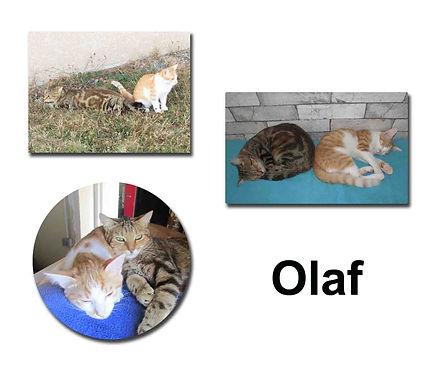 Olaf 24 10 18 copie.jpg