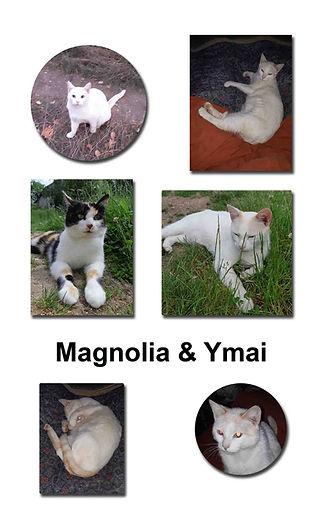 Magnolia 21 10 18 copie.jpg
