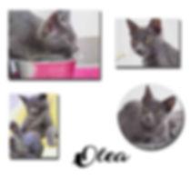 OLEA copie.jpg