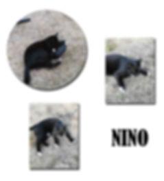 NINO copie.jpg