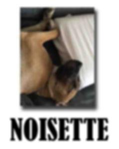 NOISETTE EX NANETTE copie.jpg