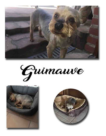 GUIMAUVE copie.jpg